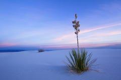 White Sands in Twilight stock photos