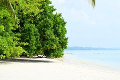 White Sandy Beach with Azure Sea Water Leaning Coastal Trees on Bright Sunny Day - Vijaynagar, Havelock, Andaman Nicobar, India. This is a photograph of a stock image