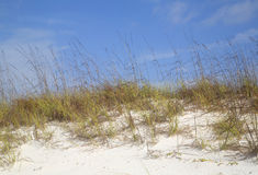 White sandy  beach with grass background Stock Photos