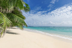 White sandy beach with palm trees Royalty Free Stock Image