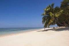White sandy beach with palmtree Royalty Free Stock Photo