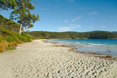 White Sandy Beach. Beach with white sands, Fortescue Bay, Tasmania royalty free stock photography