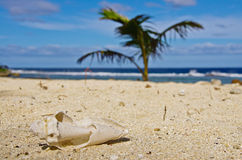 White sandy beach in Tonga. A close up of an old shell with a palm tree and the beautiful blue sky and ocean in the background stock image