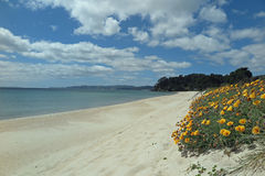 White sandy beach Stock Images