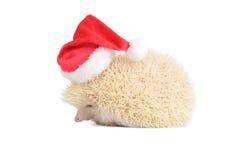 White santa hedgehog. Royalty Free Stock Image