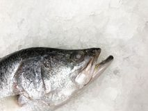 White sea bass. On the ice on a fishmongers stall stock photos