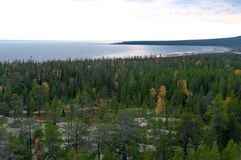 White sea behind the autumn forest royalty free stock photography
