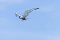 White sea bird Royalty Free Stock Images