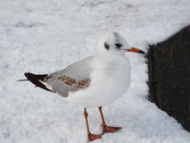 White sea bird Stock Photography