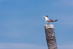 White sea bird Stock Photos