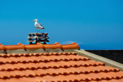 White sea gull sitting on stone roof Stock Image