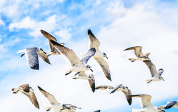 White sea gulls flying in the blue sunny sky Royalty Free Stock Photography