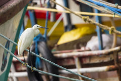 White sea heron at theharbour of Indian ocean in Sri Lanka Royalty Free Stock Photography