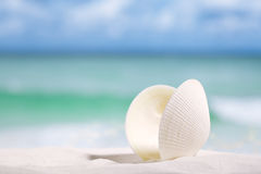 White sea shell  on  beach sand. And sea blue background Royalty Free Stock Photo