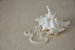 White sea shell with beads. stock photos