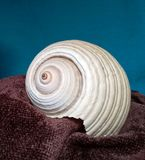 White sea shell on brown folded scarf. Sea shell on brown folded scarf with blue beckground Stock Image