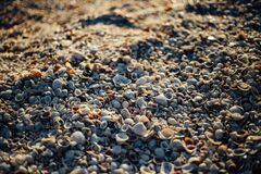White Sea Shells Royalty Free Stock Photos