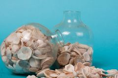 Sea shells on a green background Stock Photos