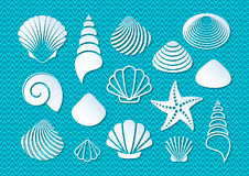 White sea shells icons vector illustration