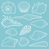 White sea shells vector icon set Stock Photo