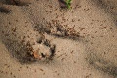 White sea Soil. Ant on soil Royalty Free Stock Photography