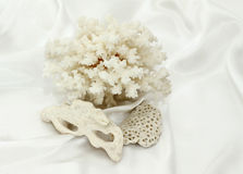 White sea souvenirs: a coral and stones Royalty Free Stock Photography