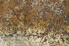 A white sea stone with cracks and yellow moss with black mold. natural rough surface texture. White sea stone with cracks and yellow moss with black mold royalty free stock images