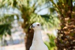 White Seagull Bird Portrait Royalty Free Stock Photos