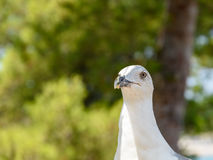 White Seagull Bird Portrait Stock Photo