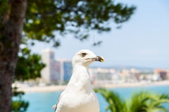 White Seagull Bird Portrait With Tropical City Skyline Background Royalty Free Stock Images