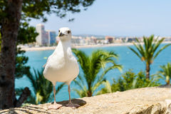 White Seagull Bird Portrait With Tropical City Skyline Background Stock Image