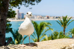 White Seagull Bird Portrait With Tropical City Skyline Background Royalty Free Stock Image