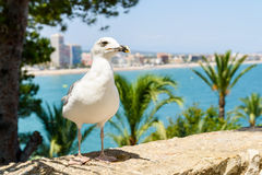White Seagull Bird Portrait With Tropical City Skyline Background Royalty Free Stock Photos
