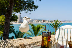 White Seagull Bird Waiting To Feed Next To Restaurant Table Stock Images
