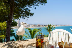 White Seagull Bird Waiting To Feed Next To Restaurant Table Royalty Free Stock Image