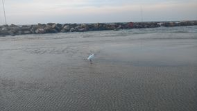 A White seagull in the coast of tel aviv Stock Photography