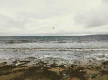 White seagull, dove above mossy, sand beach shore. stock photo