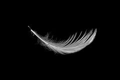 White seagull feather on black Stock Photography