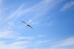 White seagull flying away on blue sky background Royalty Free Stock Photos