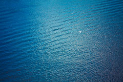 White seagull flying over deep blue waves Stock Photo