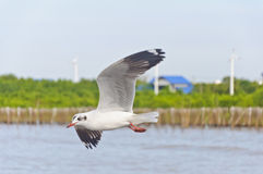 The white seagull flying in sky over the sea Stock Image