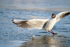 White seagull on the Royalty Free Stock Images
