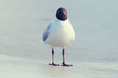 White seagull on the Stock Image