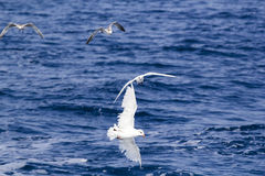 White seagull over the blue sea Stock Photos