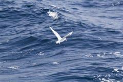 White seagull over the blue sea Royalty Free Stock Photos