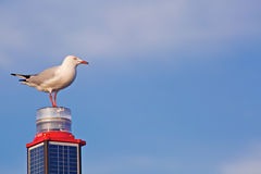 White seagull on a pile Royalty Free Stock Image