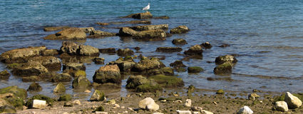 White seagull. On the rock Royalty Free Stock Photography