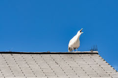 White seagull on a roof Stock Images