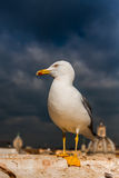 White seagull on roof top Royalty Free Stock Images