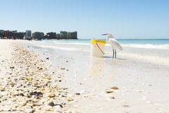 White Seagull on Seashore Beside Plastic Container Stock Photo